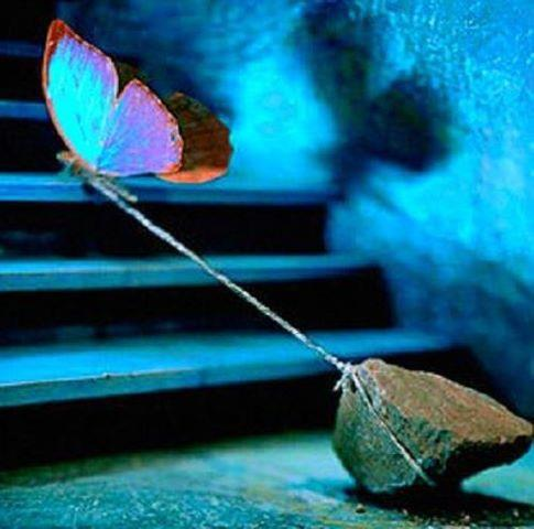 butterfly tied to rock
